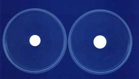 Flasking Patches and  Adhesive Microfiitration Discs